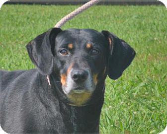 Doberman Pinscher Mix Dog for adoption in Mukwonago, Wisconsin - **LUCKY** REDUCED FEE!