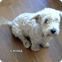 Adopt A Pet :: China (Ritzy) - Lindsay, CA