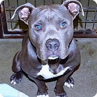 Adopt A Pet :: Kaiser - San Jacinto, CA