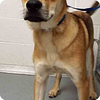 Adopt A Pet :: ADOPTED!!!   Tucker - Channahon, IL