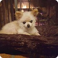 Adopt A Pet :: Triscuit - El Cajon, CA