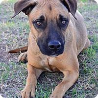 Adopt A Pet :: Capricorn - Midland, TX
