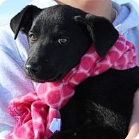 Adopt A Pet :: Emily - Lander, WY