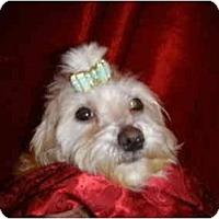 Adopt A Pet :: Chelsea - Mooy, AL