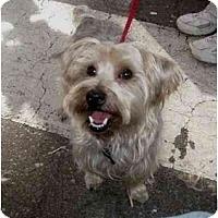 Adopt A Pet :: Bendi - Conroe, TX