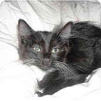 Adopt A Pet :: Penelope - Irvine, CA