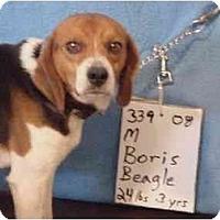 Adopt A Pet :: Boris - RESCUED! - Zanesville, OH