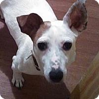 Adopt A Pet :: Madeline - Rhinebeck, NY