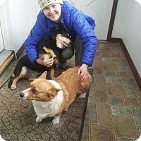 Adopt A Pet :: Eva June & Sis - Downers Grove, IL