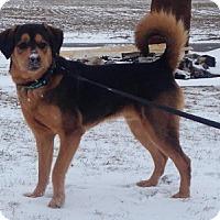 Adopt A Pet :: D.J. - Hamilton, ON