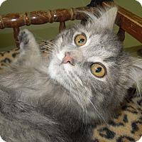 Adopt A Pet :: Orrville - Medina, OH