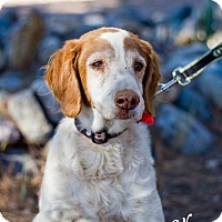 Adopt A Pet :: Sawyer - Phoenix, AZ