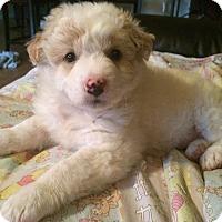 Adopt A Pet :: Annabelle - Brea, CA