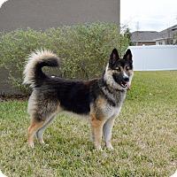 Adopt A Pet :: Magnum - Ormond Beach, FL