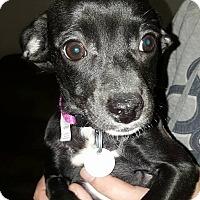 Adopt A Pet :: Sky - Tomah, WI