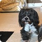 Adopt A Pet :: Marlo