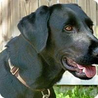 Adopt A Pet :: Chanel - Denton, TX