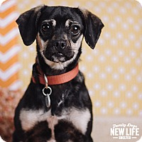 Adopt A Pet :: Millie - Portland, OR