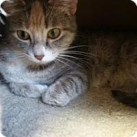 Adopt A Pet :: Tanzanite - Chippewa Falls, WI