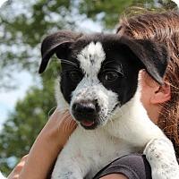 Adopt A Pet :: Moon Dance - Harmony, Glocester, RI