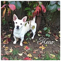 Adopt A Pet :: Keno - Hope, BC