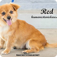 Adopt A Pet :: Red - Modesto, CA