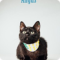 Adopt A Pet :: Angus - Houston, TX