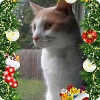 Adopt A Pet :: Rupert - Richmond, VA