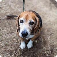 Adopt A Pet :: Ferdinand - Chino Hills - Chino Hills, CA