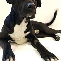 Adopt A Pet :: Ali - Elyria, OH