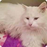 Adopt A Pet :: LA-Eddie (carefully read listing 4 applying) - Devon, PA