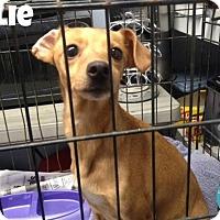 Adopt A Pet :: Jolie - Kimberton, PA