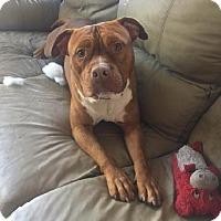Adopt A Pet :: King - Libertyville, IL