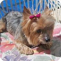 Adopt A Pet :: Missus - The Village, FL