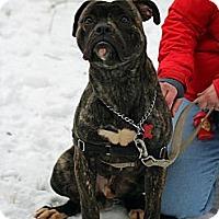 Adopt A Pet :: Rumson - Tinton Falls, NJ