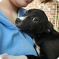 Adopt A Pet :: Jan - South Jersey, NJ