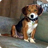 Adopt A Pet :: Dandelion - Novi, MI