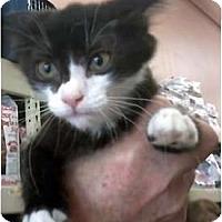 Adopt A Pet :: Jacee - Jacksonville, FL