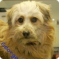 Adopt A Pet :: George - Norfolk, NE