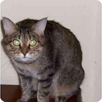 Adopt A Pet :: Walie - Simms, TX