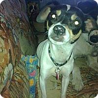 Adopt A Pet :: Lyric - Cumberland, MD