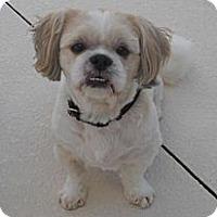 Adopt A Pet :: SAMMY: Adopted - Palm Coast, FL