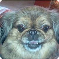 Adopt A Pet :: Izzi-PA - Mays Landing, NJ