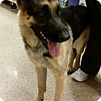 Adopt A Pet :: Dino - Victorville, CA