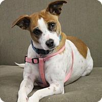 Adopt A Pet :: Elsa - Homewood, AL