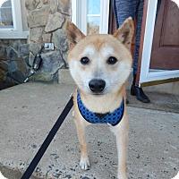 Adopt A Pet :: Kazuki - Manassas, VA