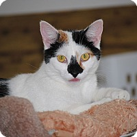 Adopt A Pet :: Avery - Middletown, NY