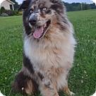 Adopt A Pet :: Maddox
