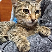 Adopt A Pet :: Lana - Long Beach, NY