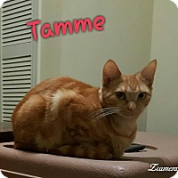 Adopt A Pet :: Tamme Loving Tiger Girl - McDonough, GA